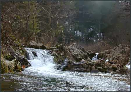 Goose Creek ~ Image Copyright Fred First